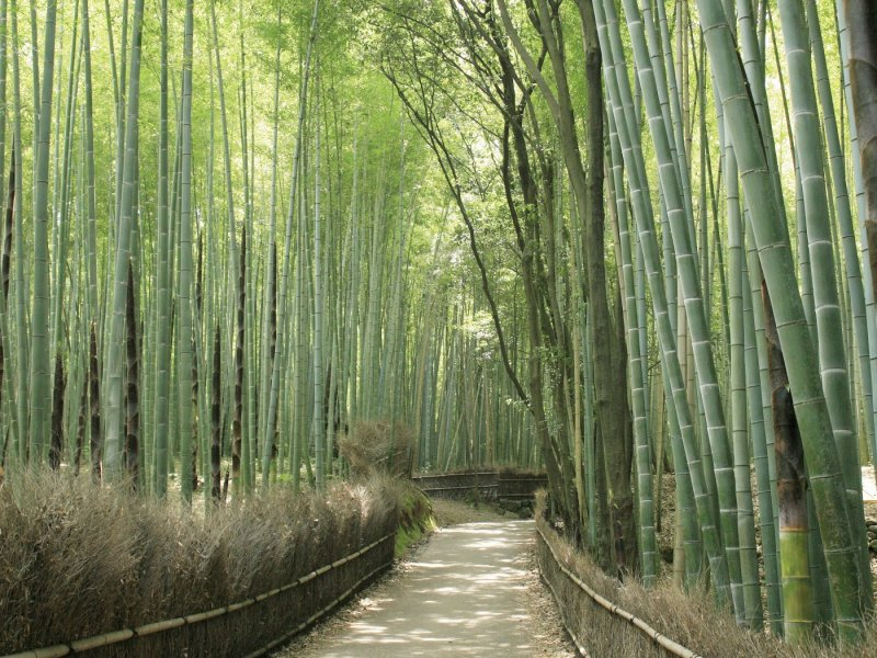 Kyoto Arashiyama Morning Tour